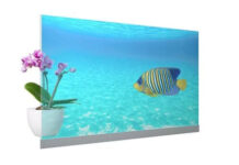 Panasonic Unveils Its First Transparent Commercial OLED Displays